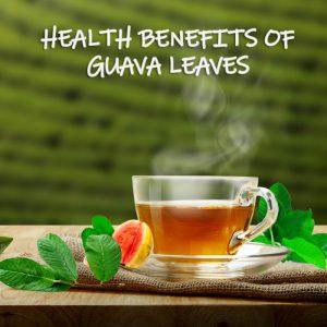 Guava Leaves: Health Benefits and How To Make Tea